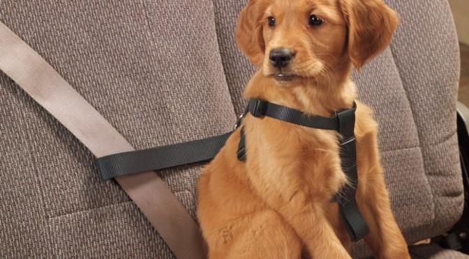 Vervoer je hond veilig