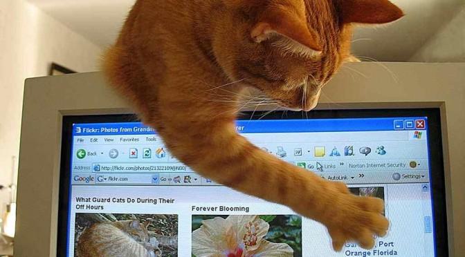 Werken met een kat in huis, een uitdaging.