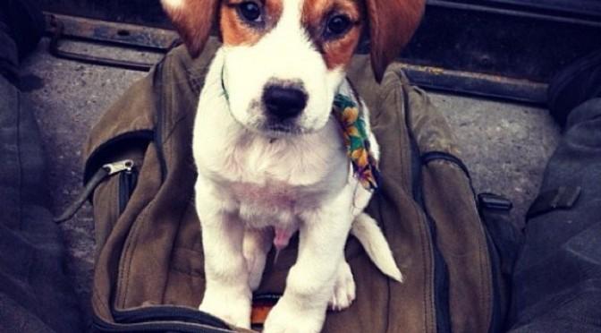 Van straathond tot Instagram ster