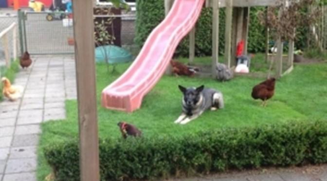 Heldhaftige huishond pakt inbreker