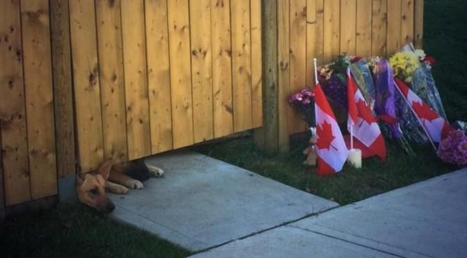 Honden omgekomen Canadese soldaat wachten op thuiskomst baasje