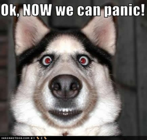 dog_pictures_now_panic-s435x415-180592