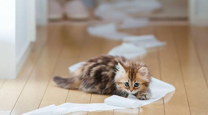 Badkamermat weer onder kattenplas. En nu?