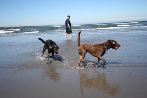 Samen naar het strand, dat is pas écht vakantie
