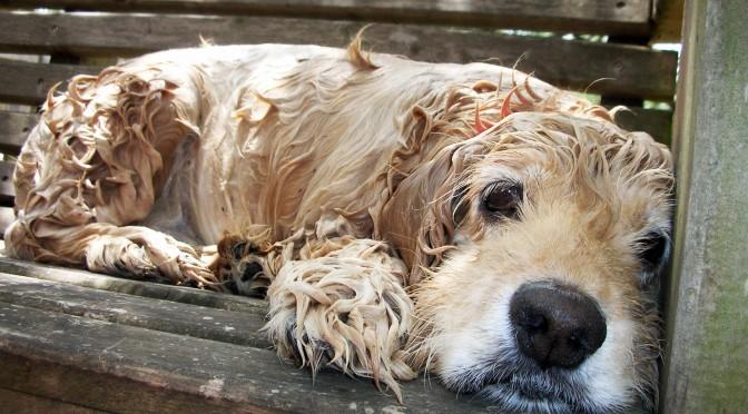 Badtips voor je hond
