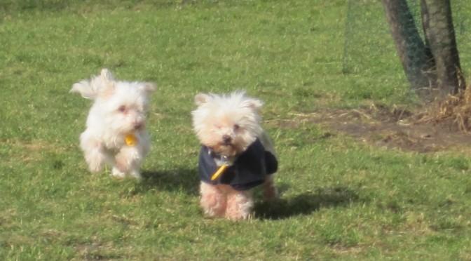 Hartverwarmend: bejaardentehuis voor honden