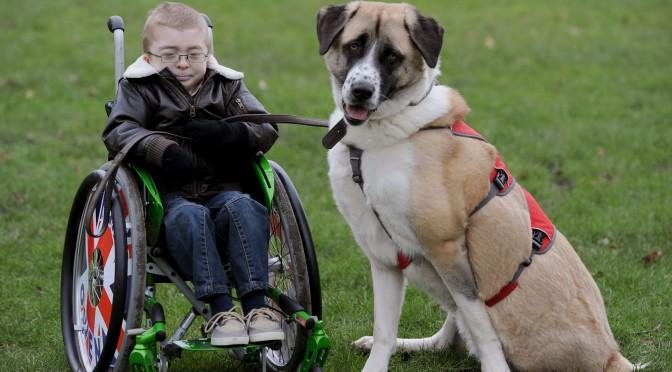 Hond Haatchi geeft leven van Owen (9) weer zin