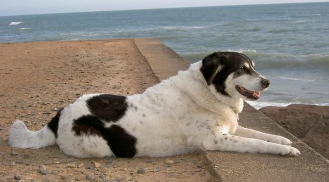 Taksi, ode aan een hond uit Turkije
