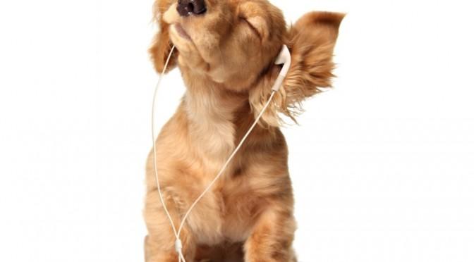 Waarom de radio aanlaten voor je hond een oplapmiddel is
