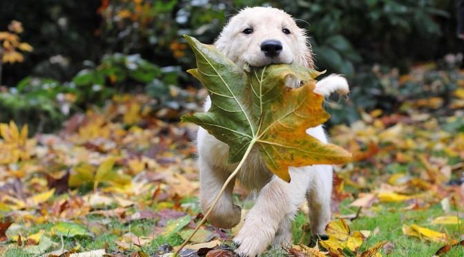 Weet mijn hond dat het herfst is?