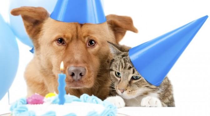 Waarom zijn er honden- en kattenjaren?