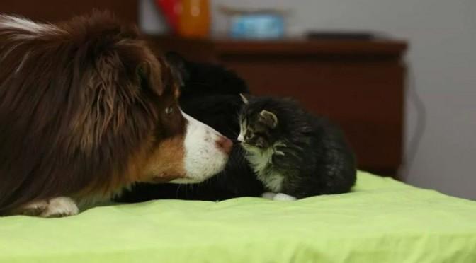 Staarwedstrijd hond en kat, wie knippert het eerst?