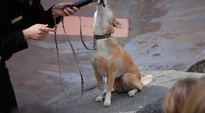 Kan een hond een liedje herkennen?
