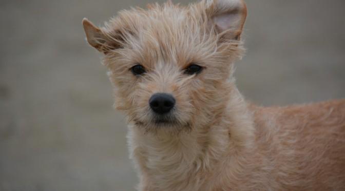 Zou jij 2 jaar wachten op een puppy?