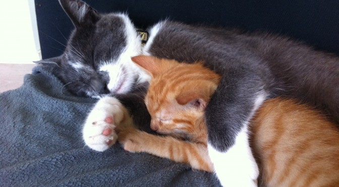 Oude kat en nieuwe kat, hoe doe je dat?