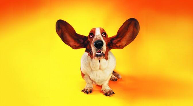Stinkende oren bij je hond, wat doe je er aan?