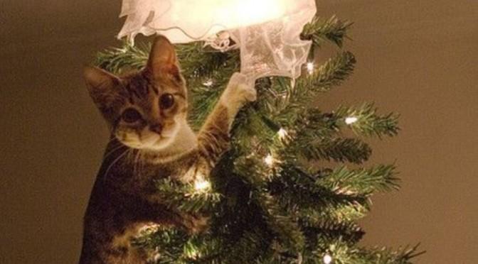 Zo word je kerstboom huisdierproof