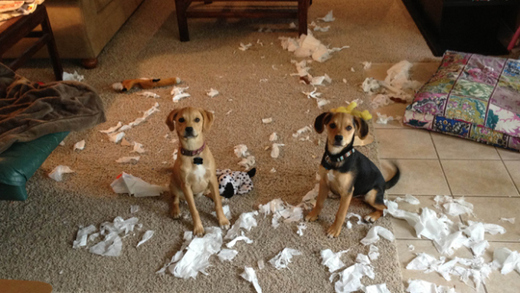 guilty-dog-faces-8