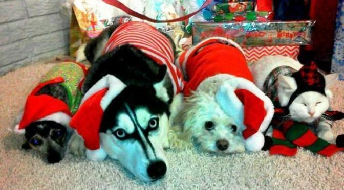 Kerst stress. Ook stress voor je hond of kat?