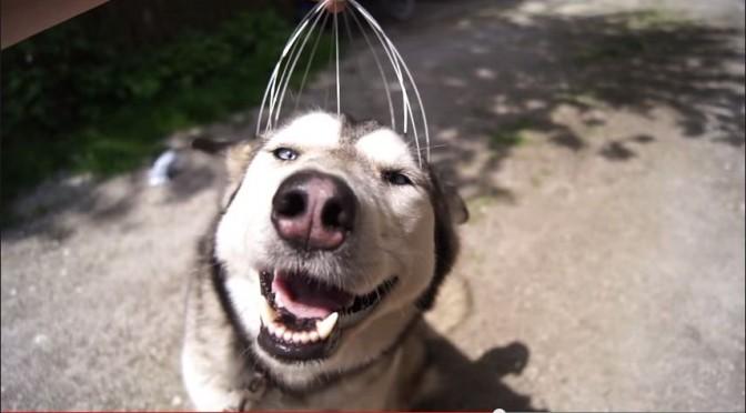 Hond geniet van hoofdmassage