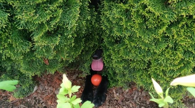 12 honden en katten die ervan overtuigd zijn dat je ze niet ziet