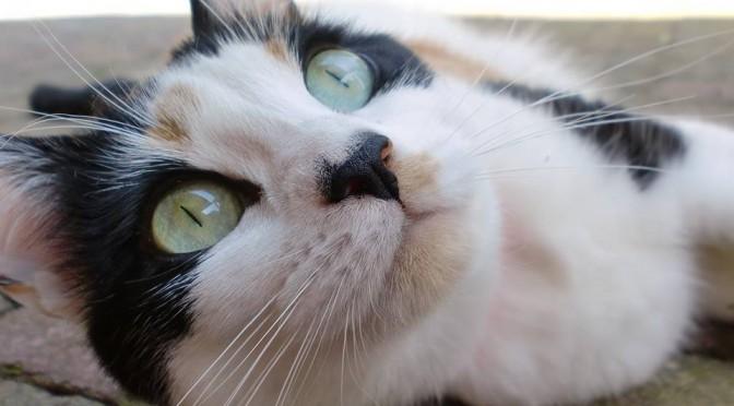 Een psycholoog voor je kat, bestaat dat?