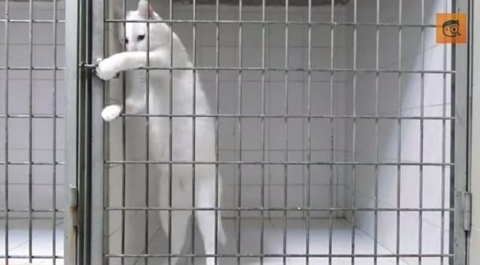 Maak kennis met Marsmellow, de Houdini van alle katten