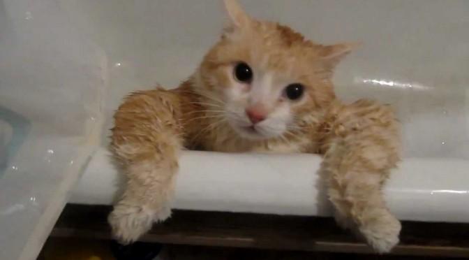 Je kat wassen, moet dat?