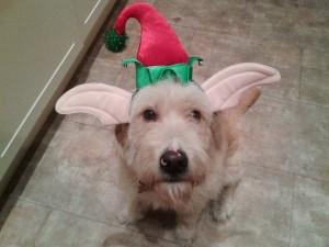 pedro van eli (spaanse rasbakkenhond)