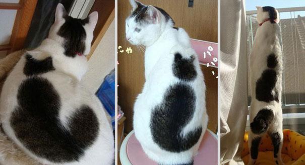 De 10 leukste katten vachtjes