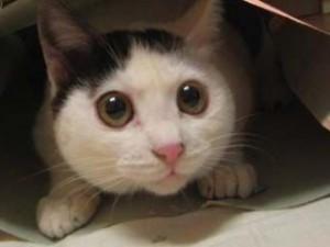 Hoe kan je ervoor zorgen dat je kat minder bang is?