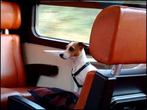 hond_in_trein