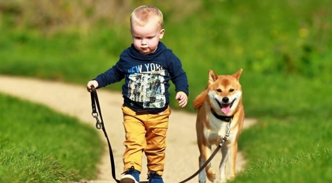 9 redenen waarom een hond een kind bijt