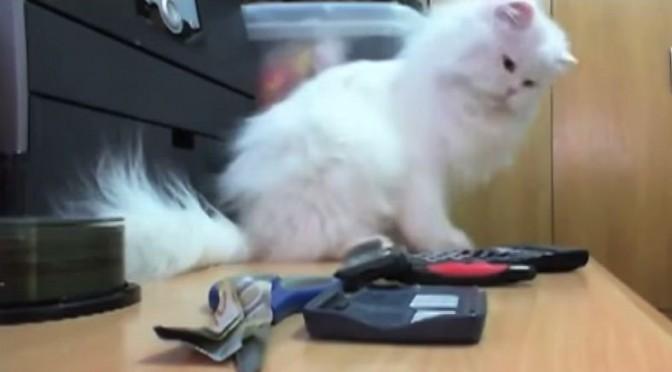 Katten gooien alles om (video)