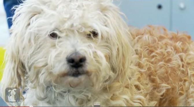 Makeover redt leven asiel hond