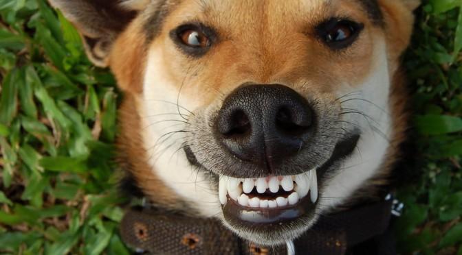 De beste tips voor een gezond gebit van je hond