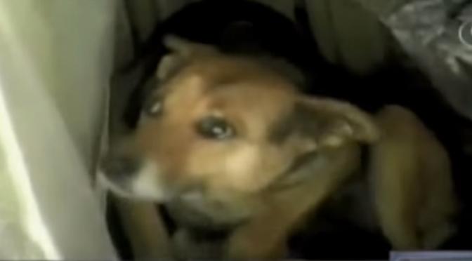 Hond China redt achtergelaten baby