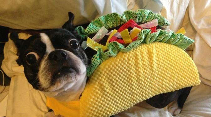 10 dingen die honden haten en mensen toch doen