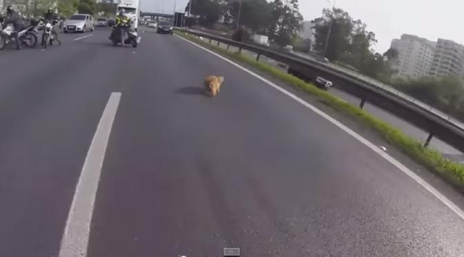 Bikers redden hond op de snelweg