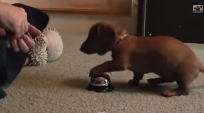 Schattige hond belt voor snoepje