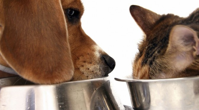 Hond of kat en weinig geld? Dierenvoedselbank biedt uitkomst