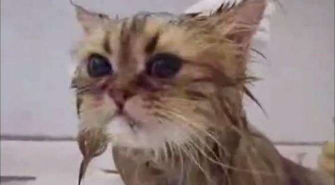 Niet elke kat haat een bad
