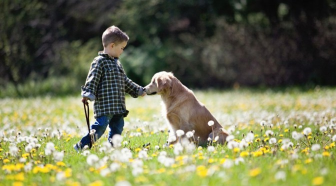 Schattige hond zonder ogen helpt gehandicapten en geestelijk zieken