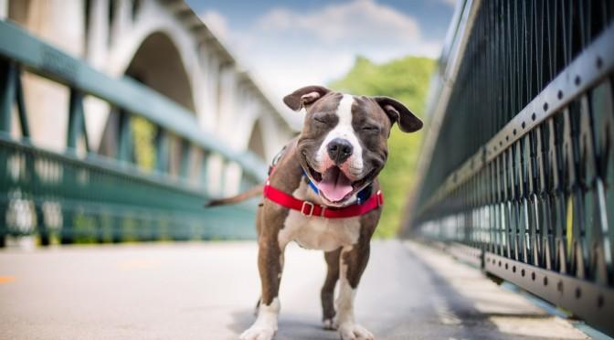 Gezichtsexpressie honden hetzelfde als mensen?