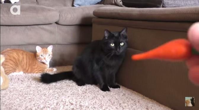 2 katten, een wortel en een konijn