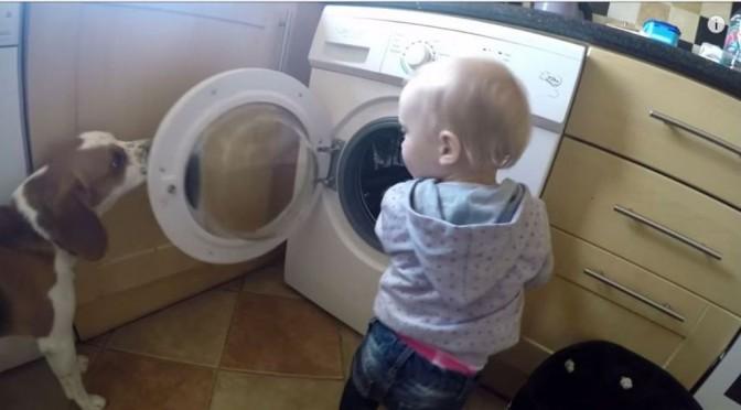Hond leert peuter hoe je de was doet