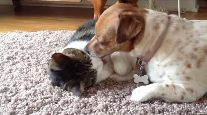 Hond wast zijn maatje, de kat
