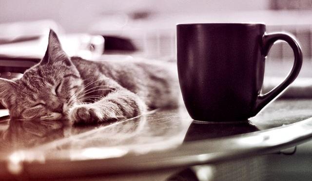 Eerste kattencafé Nederland geopend