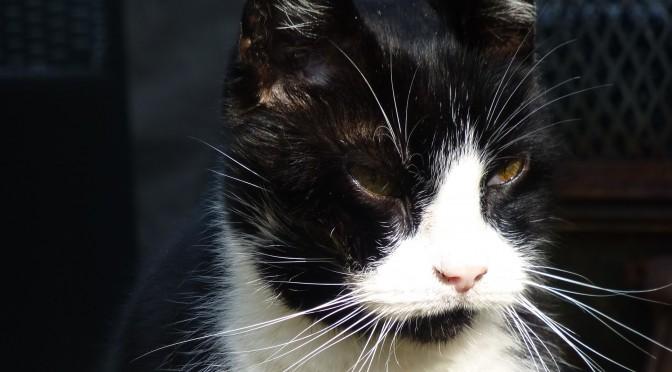 Afscheid nemen van kat Romeo