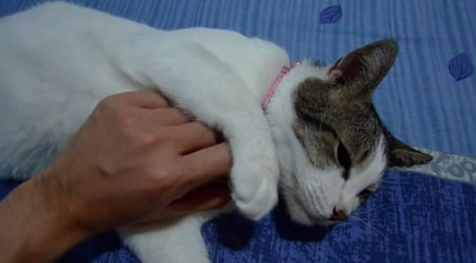Volledige massage voor je kat